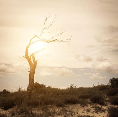 arboles secos: Árboles muertos en la pradera. Foto de archivo