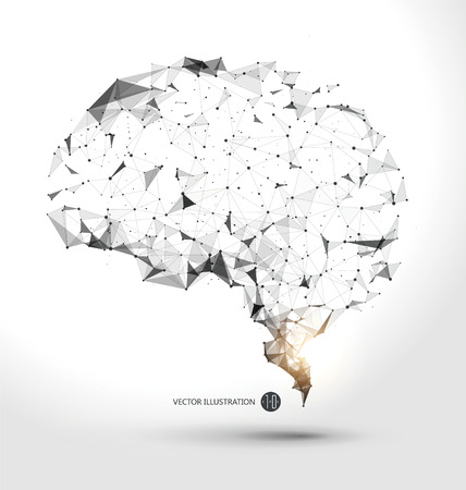 Przewody z punktu grafiki mózgu