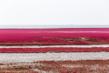 Red beach. Stock fotó