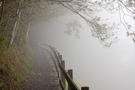 Fenced hiking path in a foggy forest