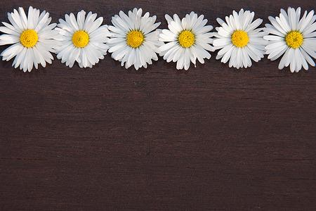 Daisy border on dark brown background Stok Fotoğraf