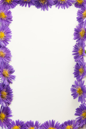 aster flowers: Purple flower border four sides isolated