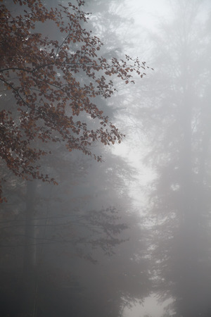 Shaft of light in foggy forest  Stok Fotoğraf