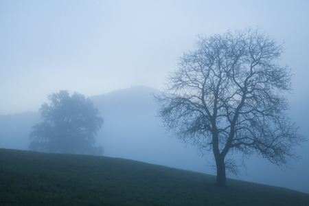 Blue hazy mountain peak with solitary trees in pale morning light