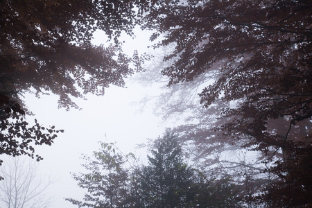 Upward view to the grey sky in a foggy forest Stok Fotoğraf