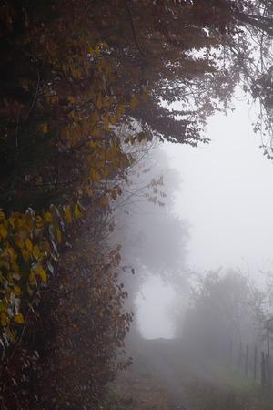 Misty forest edge path neutral colors Stok Fotoğraf