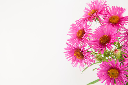 Hot pink bunch of flowers half frame border isolated on white