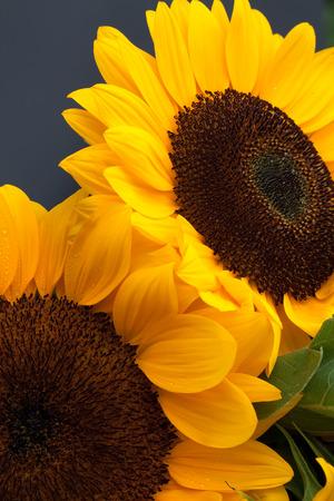 Pair yellow sunflowers vertical format