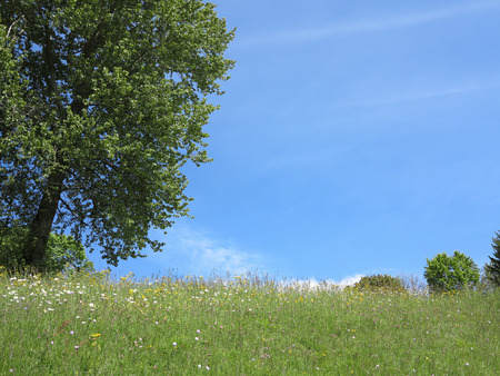 Summer meadow with green tree and blue sky