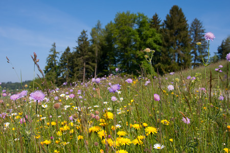 Springtime meadow next to forest trees