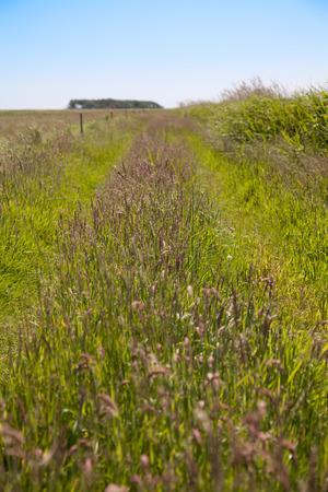 wild grasses Stok Fotoğraf
