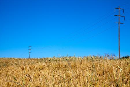 Telephone poles in grain field