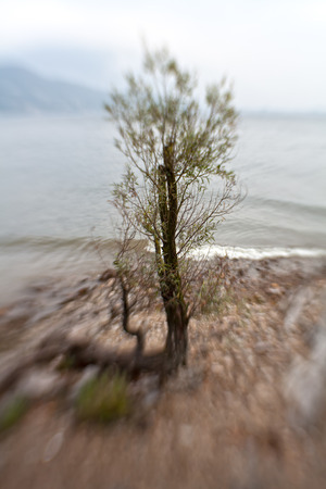 Young willow tree on shoreline Stok Fotoğraf