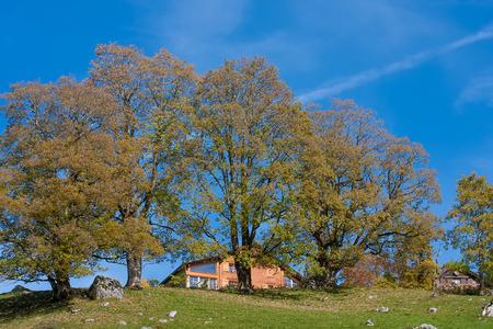 Countryside Alpine Chalet Editöryel