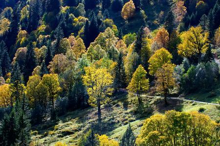 Colorful autumn trees Stok Fotoğraf - 33260832