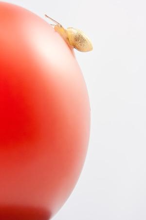 Tiny snail moving up red tomato Stok Fotoğraf - 33261102