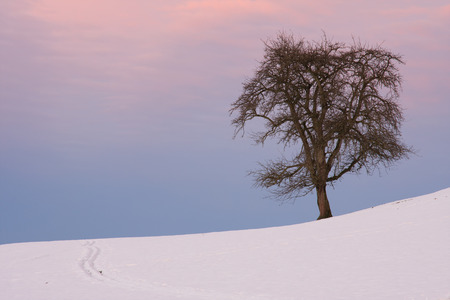 Winter Solstice morning with lone tree and ski tracks Stok Fotoğraf - 33263447