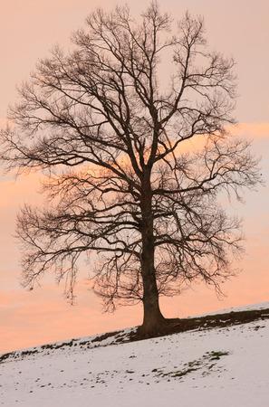 Portrait of a tree in Winter Stok Fotoğraf - 33263478