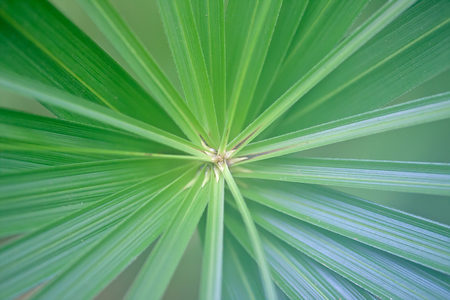 Green palm leaf radiating from center