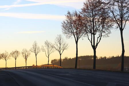 Roadside trees at sunset