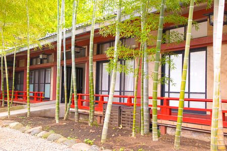 Bamboo landscaping in front of building