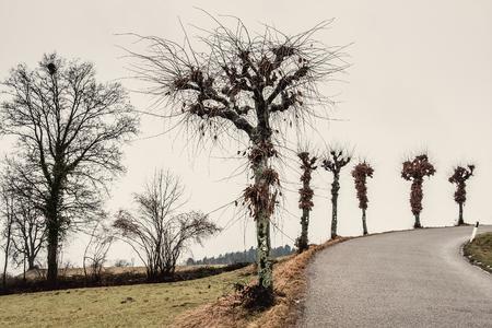 Leafless roadside trees on a curved road Stok Fotoğraf