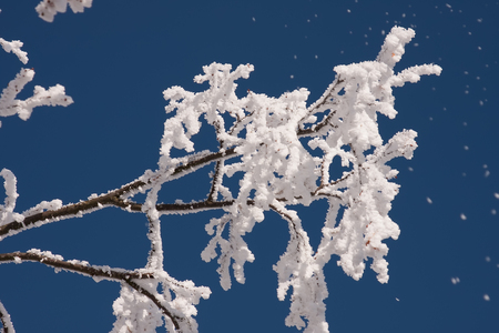 Tree branch covered in snow against blue sky Stok Fotoğraf - 89328957