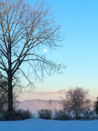 Moon behind tree at sunset with distant fog Stok Fotoğraf - 89711999