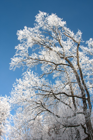 Snow covered branches on tree with blue sky Stok Fotoğraf