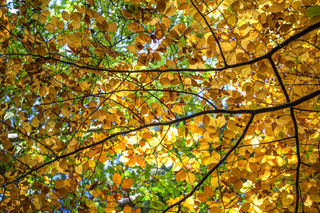 Autumn Forest  Canopy Leaf Colours Stok Fotoğraf