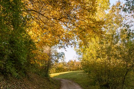 Autumn Forest Colours on Curved Path Stok Fotoğraf - 91539479