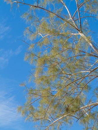 Delicate desert tree branches against blue sky