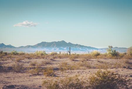 Cactus landscape in Arizona