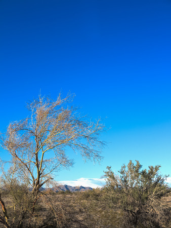 Desert landscape with blue sky and distant mountains