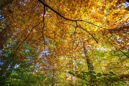 Autumn forest colours looking upwards towards sky