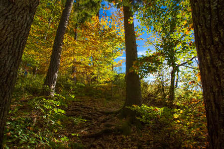 Deciduous Autumn forest trees and leaves