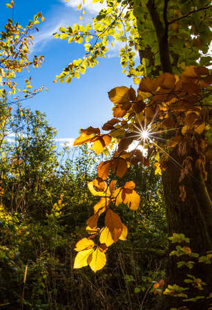 Autumn forest with sunbeam filtering through the leaves