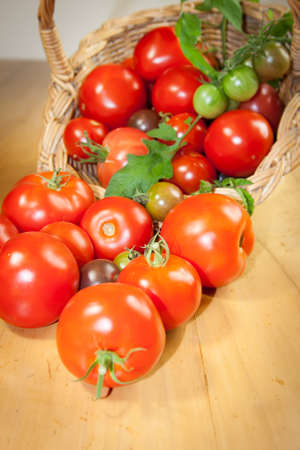 Fresh garden variety of multi-colour tomatoes spilling out of a wicker basket