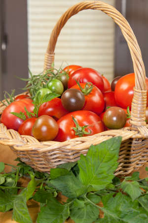 Four varieties of homegrown tomatoes in a woven basket with leaves Stok Fotoğraf