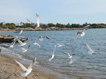 Seagull flying over the beach Imagens