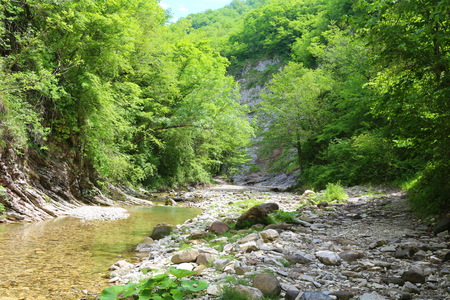fascinating: Wild nature is fascinating jungle, somewhere in the mountains, the village subtropics Dederkoy