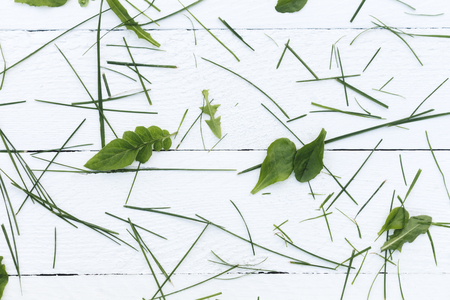 enviro: chopped green grass on a white table Stock Photo