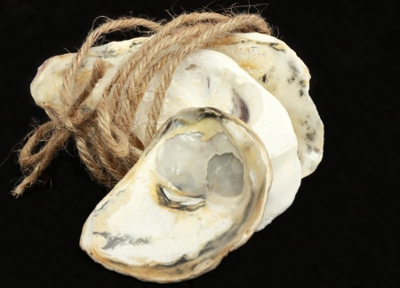 Oyster shells and rope photo
