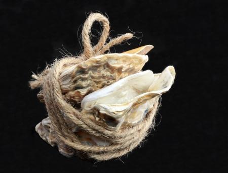 spiritless: Oyster shells Stock Photo