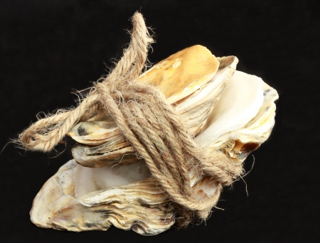Shell with rope photo