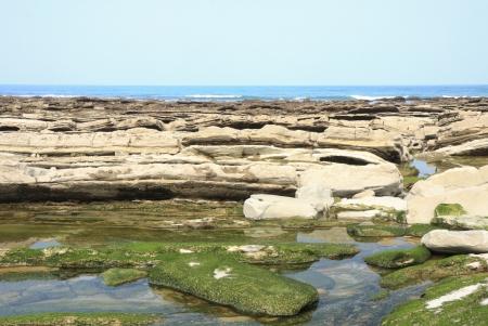 seaweeds: Stones with seaweeds Stock Photo