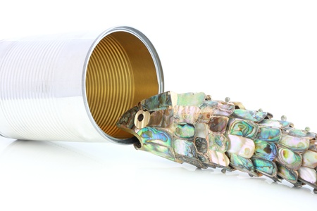 sheeny: Can biting sardine Stock Photo