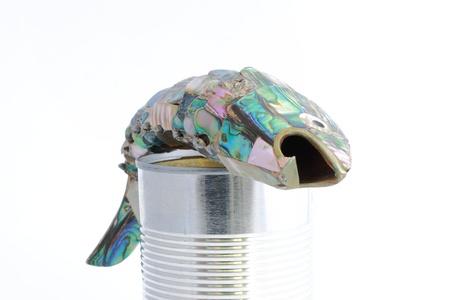 sheeny: Sardine over can