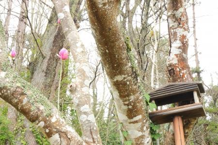 Tree with bird home photo