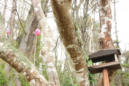 woodland hotel: Tree with bird home